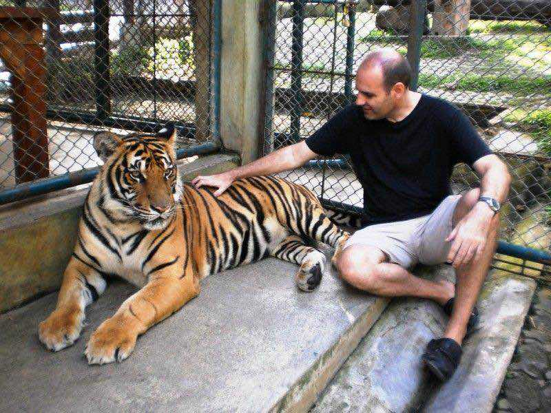Tiger Kingdom en Chiang mai