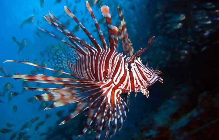 especies marinas curiosas e impresionantes de tailandia