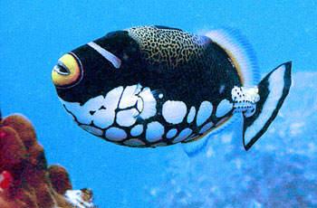 especies marinas curiosas