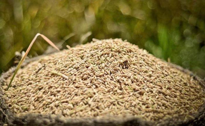 arroz ingrediente cultura tailandesa