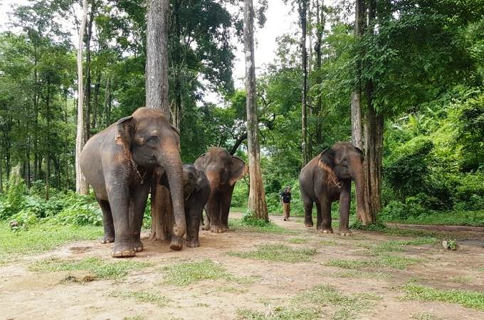 Campo de elefantes ecológico en Chiang mai