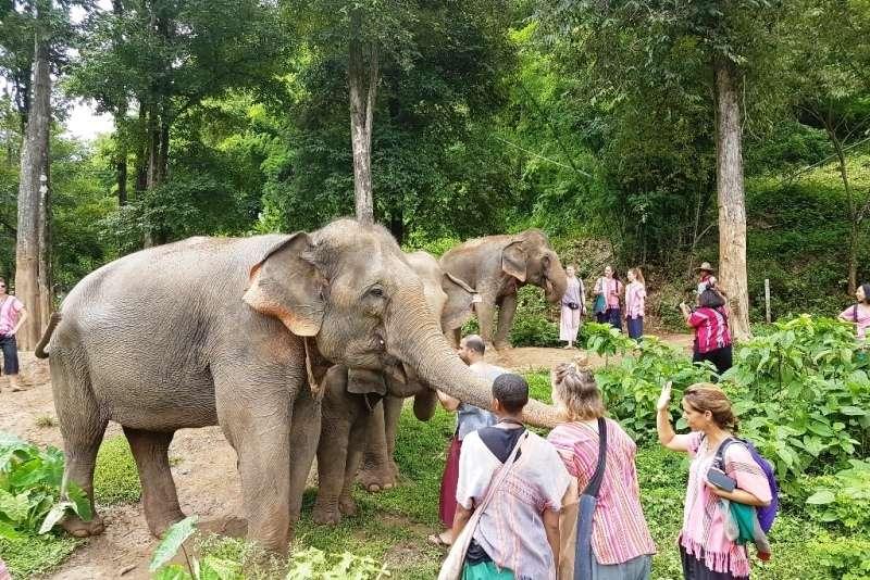 Campo de elefantes Happy elephant Camp Chiang Mai