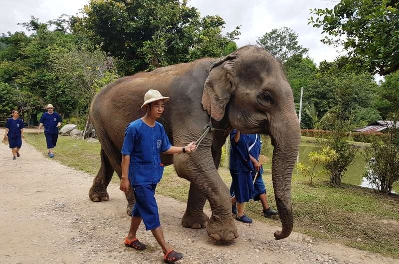 Campo de Conservacion de Elefantes en Chiang Mai