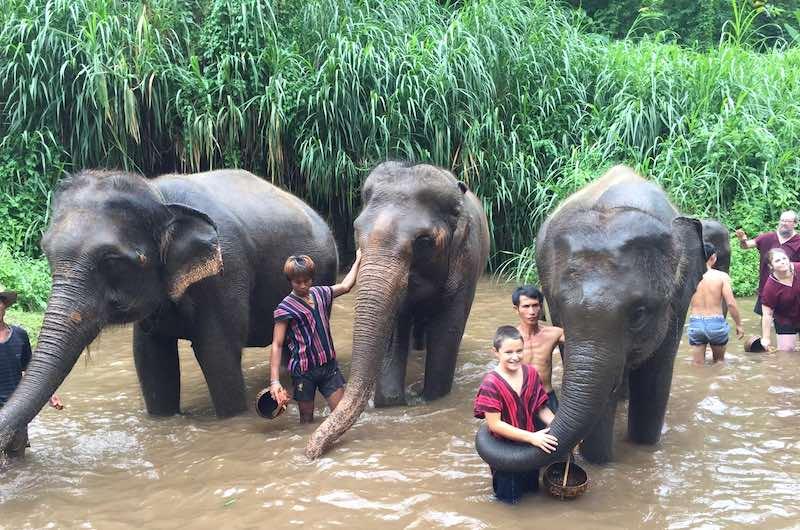 Santuarios de elefantes Chaing Mai