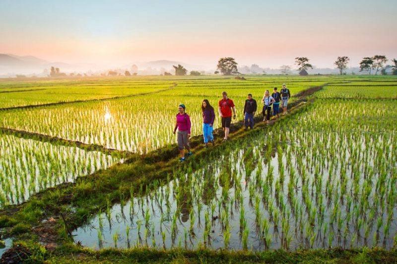 Visita a los campos de arroz en tu viaje a Tailandia en 15 días