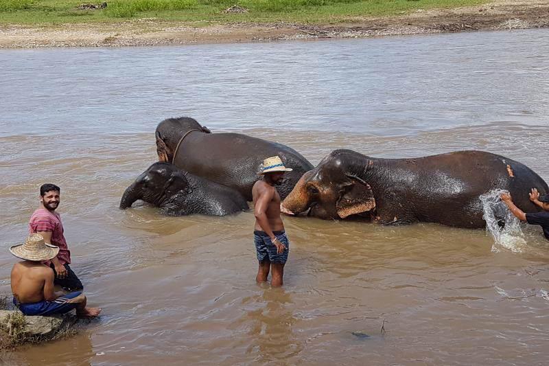 Campo Elefantes en Chiang Mai