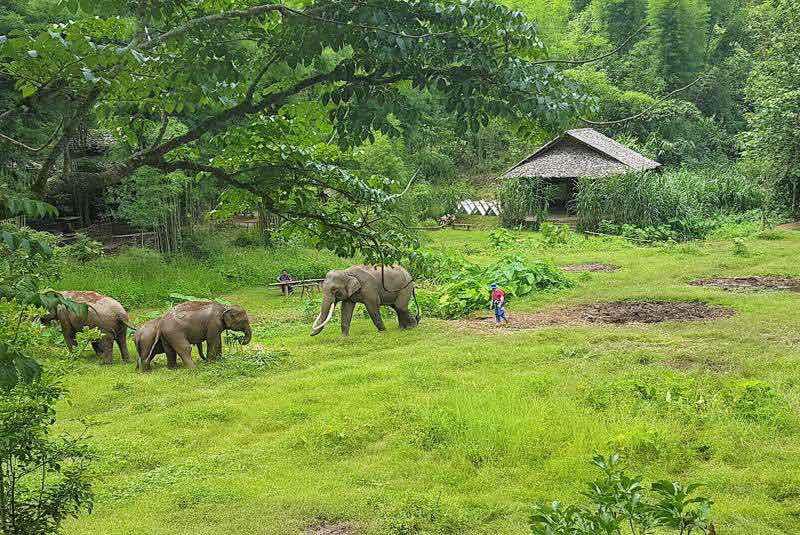 Campos de elefantes en el mes de Julio