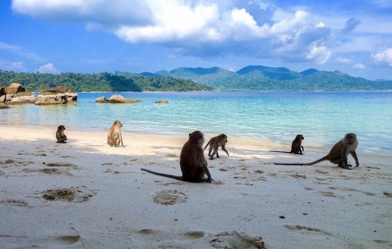 La isla de los monos en Tailandia