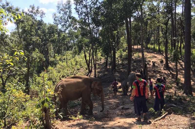 Campo de elefante en libertad