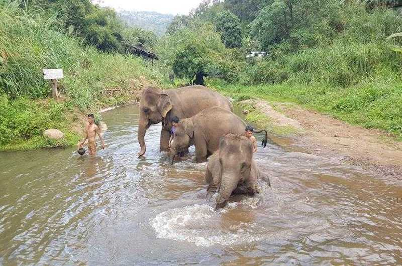 Chiang Mai Elephant Ecovalley
