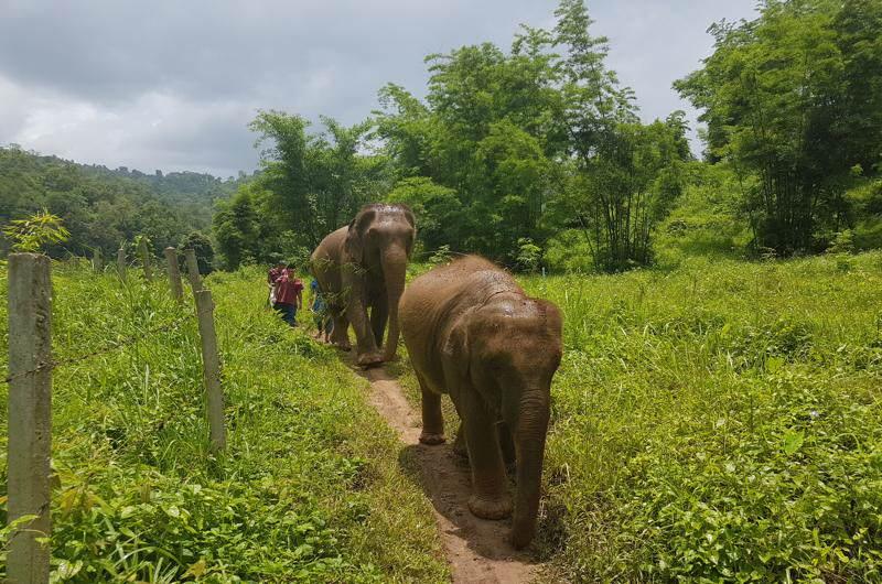 turismo en Tailandia: Campos de elefantes