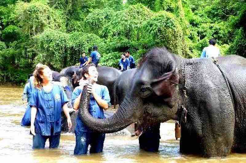Un dia con los elefantes en Chiang Mai