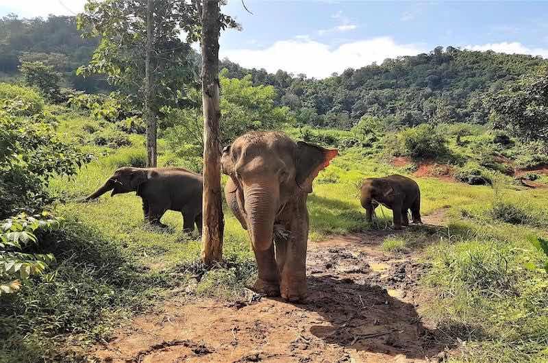 Que ver en Tailandia Campo de Elefantes Chiang Mai