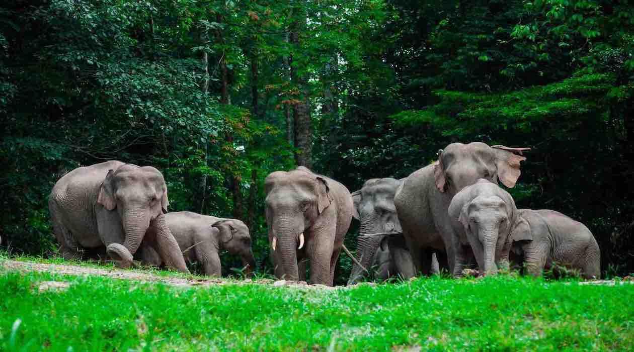 Campo de Elefantes