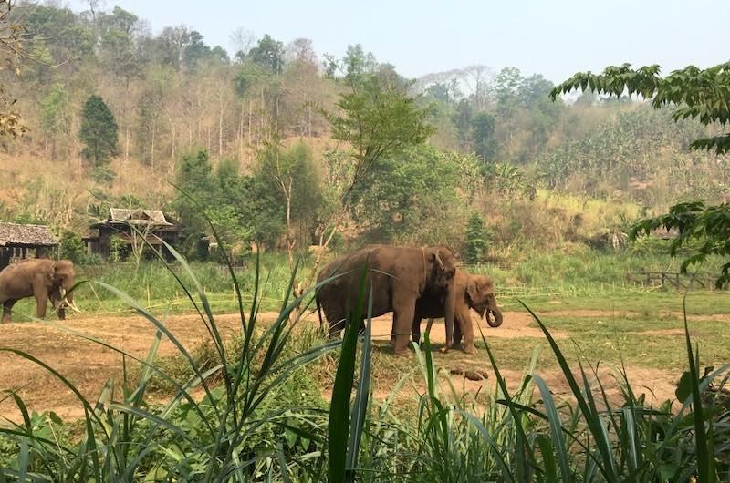 Tailandia en una semana: Campo de elefantes