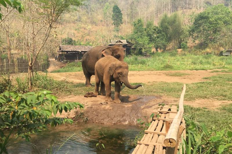 Visitar en Chiang Mai Elephant Ecovalley