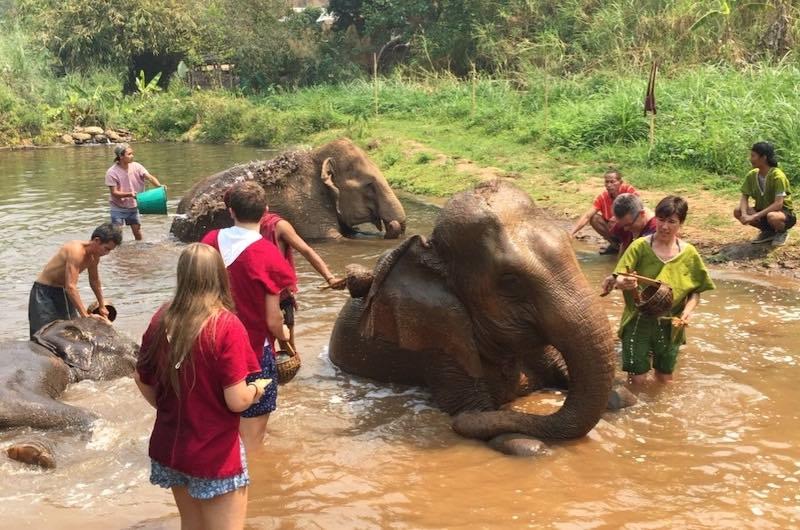 campo de elefante