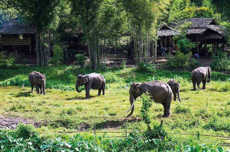 campos de conservación de elefantes