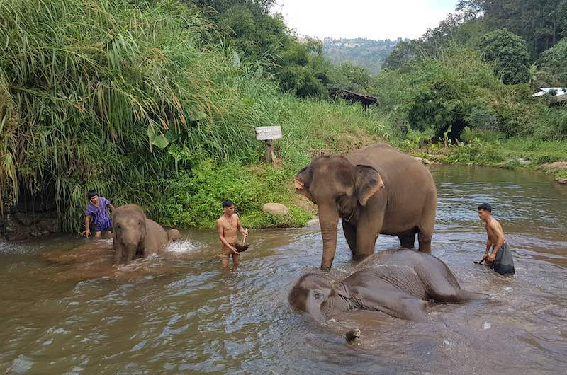 santuarios de elefantes en Chiang Mai : Elephant Eco valley
