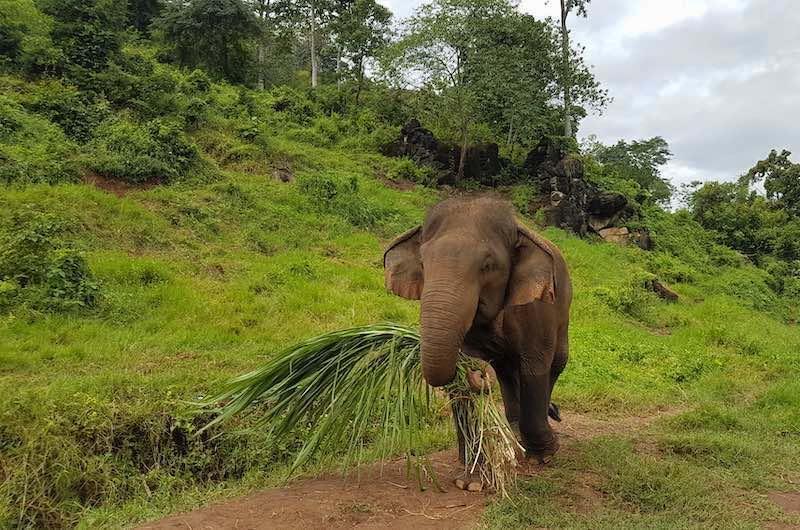 Ran-Tong Elephant rescue center