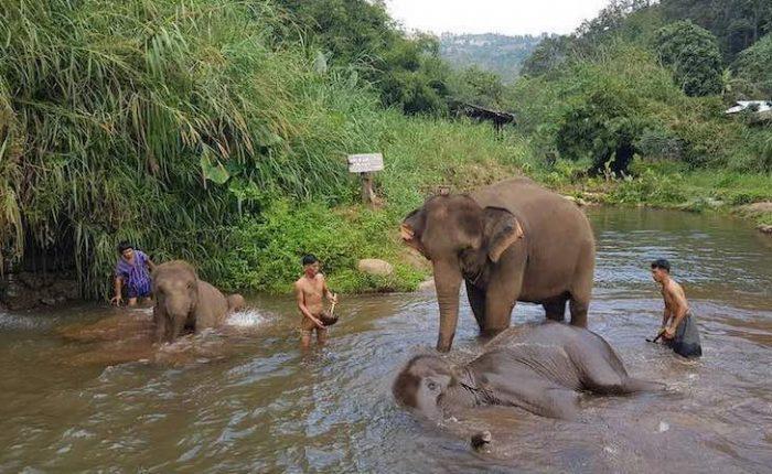 Santuarios de elefantes en Chiang Mai portada