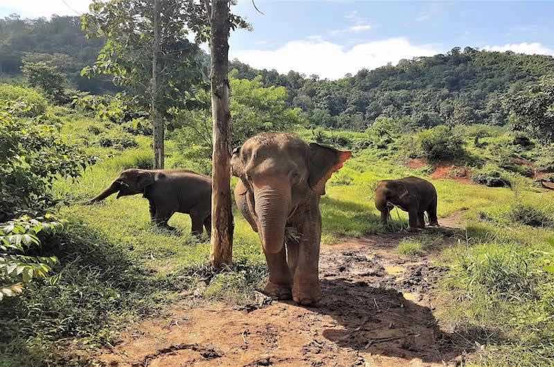Santuarios de Elefantes en Chiang Mai