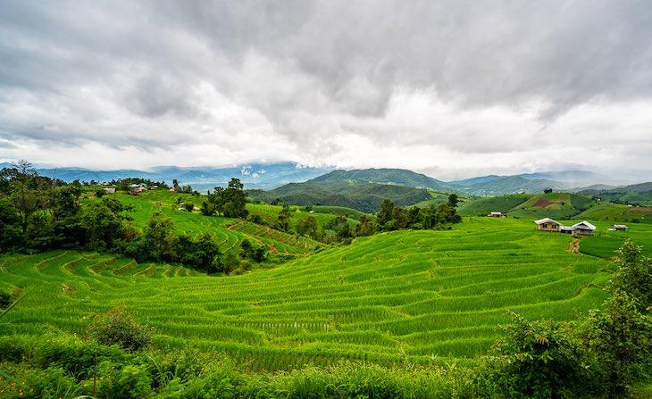 Paisajes de Tailandia campos de arroz