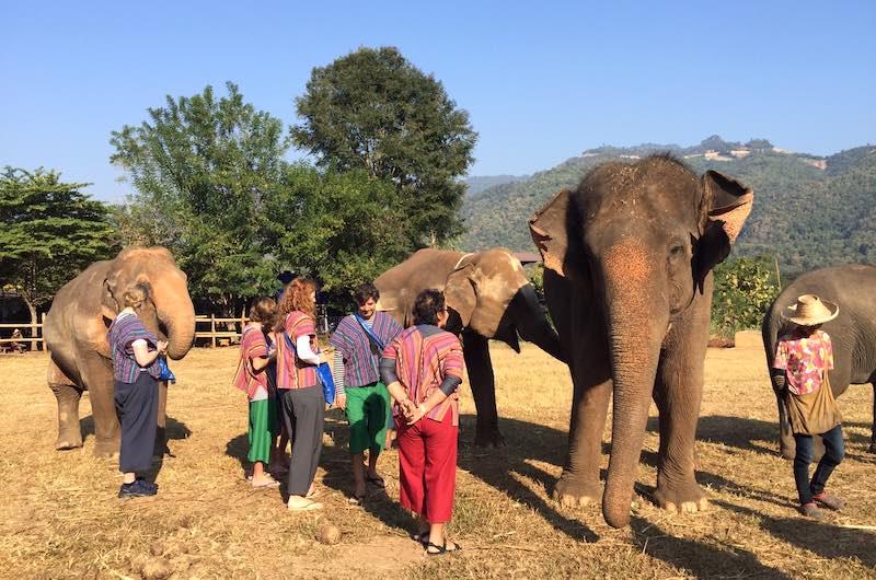Campo de elefantes Happy Elephant