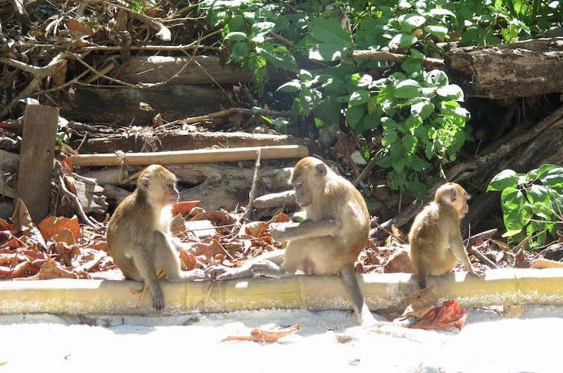 Excursion Islas Phi Phi playa de los monos