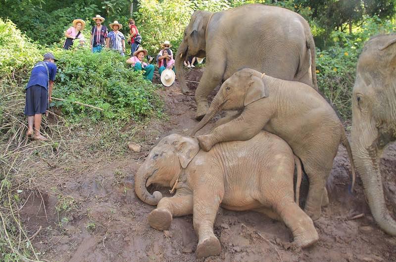 santuario de elefantes Happy Elephant