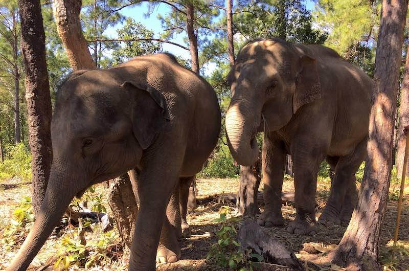 Viaje a Tailandia Camboya y Vietnam: santuarios de elefantes