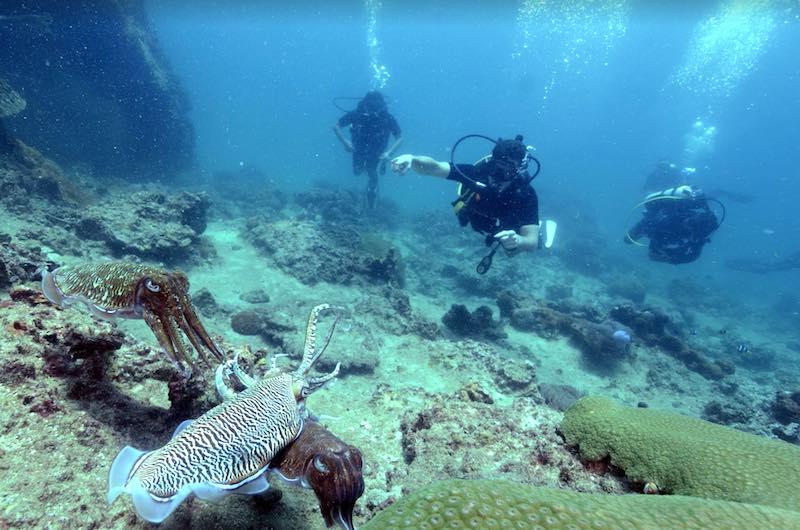 Islas Phi Phi Koh Bida Nai
