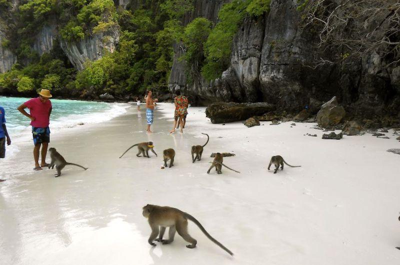 La playa de los monos en Islas Phi Phi